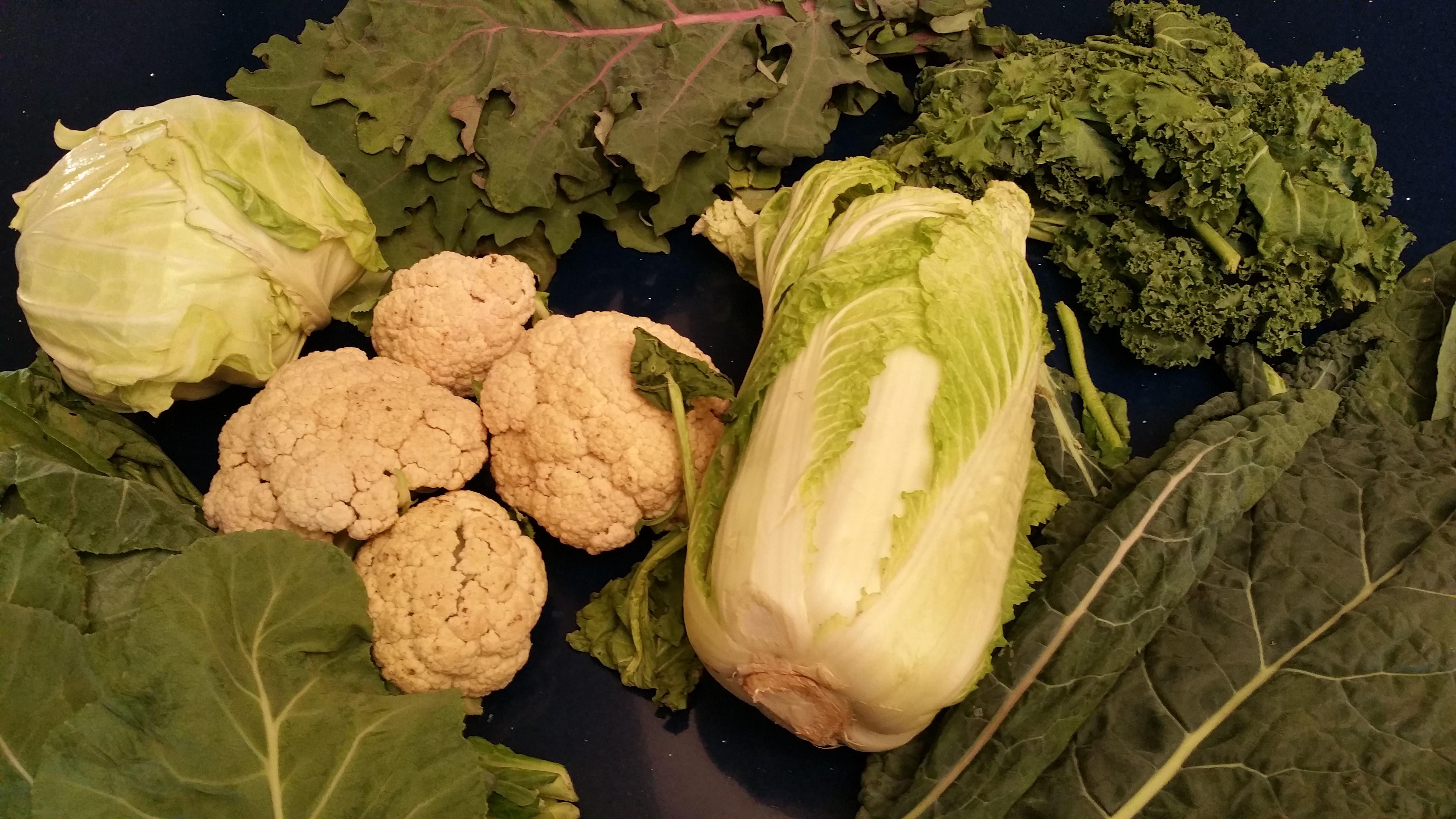 Winter Garden Vegetables