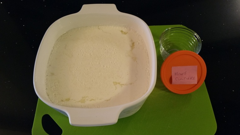 Yoghurt C
